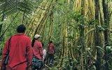 Perú podrá acceder a US$250 millones si reduce deforestación