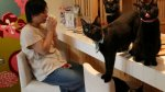 Los cafés con gatos conquistan el mundo [FOTOS] - Noticias de modas