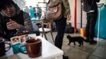 Los cafés con gatos conquistan el mundo [FOTOS] - Noticias de japón