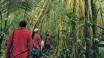 Perú podrá acceder a US$250 millones si reduce deforestación - Noticias de actores brasileños