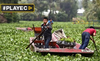 La vida en los canales de Xochimilco en México [VIDEO]