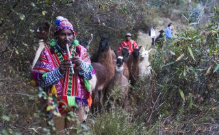 LlamaPack, uso de las llamas para el trekking en Cusco [FOTOS]