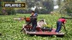 La vida en los canales de Xochimilco en México [VIDEO] - Noticias de caida de arbol