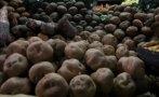 Conservan variedades de papas andinas en el hielo del Ártico