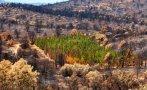 Resuelven el enigma de los cipreses que resisten incendios