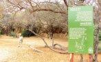 Bosque de Pómac: detectan tala en zona de amortiguamiento