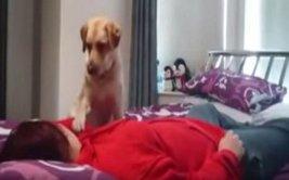 Perro ayuda a su dueña que tiene ataque epiléptico [VIDEO]