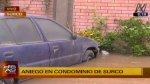 Surco: aniego de grandes proporciones dejó 9 casas inundadas - Noticias de cecilia nieto