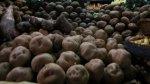 Conservan variedades de papas andinas en el hielo del Ártico - Noticias de pueblos andinos