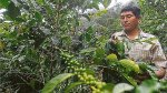 Homogenizar calidad de café será crucial para crear marca país - Noticias de santa lucila