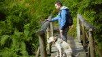 Cuidados para proteger a tu perro durante su vejez - Noticias de colitas