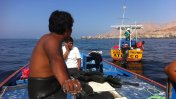 Buscan repoblar costa peruana con erizos importados de Chile