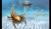 Enorme escorpión marino dominaba los mares en la prehistoria