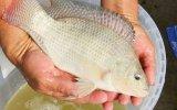 Editorial: La multiplicación de los peces