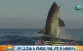 Conductores de TV quedan aterrados por salto de enorme tiburón