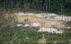 Las deforestación mundial de bosques se redujo en el año 2014