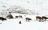 Bajas temperaturas afectan a 237 mil animales en Ayacucho