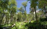 En la Tierra hay 3 billones de árboles, asegura estudio