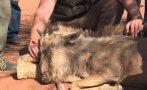 Sudáfrica: La crianza de animales salvajes como negocio [VIDEO]
