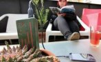 El invento que recarga el celular conectándolo a una planta