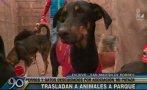 Perros y gatos vivían en pésimas condiciones en albergue de SMP