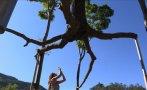 Arte selvático en Brasil [VIDEO]