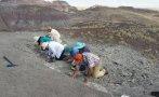 Mujer estadounidense descubre fósil de millones de años