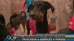 Perros y gatos vivían en pésimas condiciones en albergue de SMP - Noticias de martin mayta