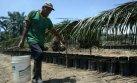 El laberinto de la palma: la selva en riesgo por vacíos legales