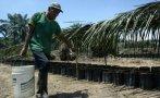 Palmicultores reclaman que no les compran su biodiesel