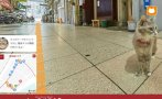 Cat Street Wiew te permite conocer Hiroshima gracias a un gato