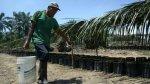 Palmicultores reclaman que no les compran su biodiesel - Noticias de palma aceitera