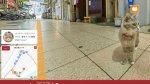Cat Street Wiew te permite conocer Hiroshima gracias a un gato - Noticias de street view