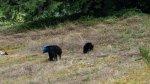 Oso con cabeza azul es visto en bosques de Canadá [VIDEO] - Noticias de aaron smith
