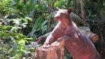 La osa Cholita encontró hogar en la reserva ecológica Taricaya - Noticias de diego durand