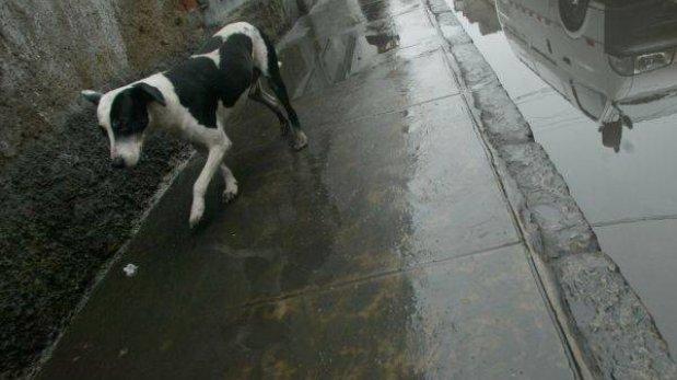 Rabia canina: mujer embarazada habría sido contagiada en Puno