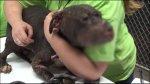 Stallone se convirtió en el símbolo contra la pelea de perros - Noticias de perro maltratado