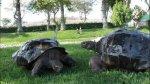 ¿Quiénes son los inquilinos más longevos del zoológico? - Noticias de cocodrilo gigante