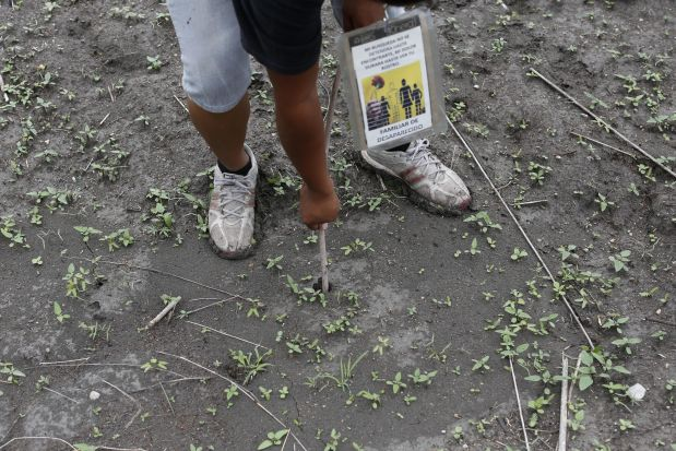 In this May 31, 2015 photo, a relative of a missing person pokes a stick into the ground to later pull it out and check for the scent of decaying flesh during a group search for a clandestine grave after receiving an anonymous tip, in Iguala, Mexico. Since the government began excavating suspected graves found by this group scouring the surrounding mountains looking for their loved ones late last year, more than 100 bodies have been exhumed though most still await identification. (AP Photo/Dario Lopez-Mills)