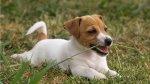 Descubre por qué tu perro suele comer pasto - Noticias de campaña de salud