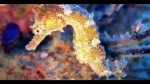 Población de animales marinos se redujo a la mitad en 40 años - Noticias de industria extractiva