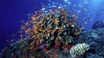 Los peces más comúnes están despareciendo de los océanos - Noticias de situación política de egipto
