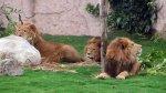 Parque de las Leyendas: Lima aprobó transferirle 1.6 millones - Noticias de animales domésticos