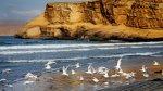 Paracas: recorre la Reserva Nacional en su aniversario - Noticias de hilton paracas