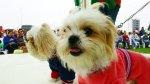 Chimbote: municipalidad sancionará a quienes maltraten a perros - Noticias de ordenanza municipal