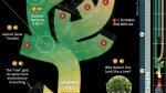 Elaboran árbol genealógico con todas las especies conocidas - Noticias de universidad durham