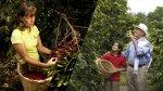 Villa Rica vs. Quindío: experiencias cafeteras en Sudamérica - Noticias de monte orquideas