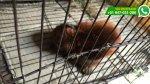 Venden animales silvestres en calles de Pucallpa y Jaén (FOTOS) - Noticias de jaén