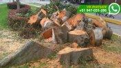 WhatsApp: ¿por qué talaron árboles en Lince? (FOTOS)