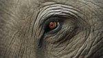 Indignación en Twitter por la muerte de elefante en Indonesia - Noticias de tala